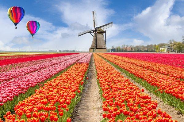 Amsterdam s návštevou tulipánových záhrad Keukenhof