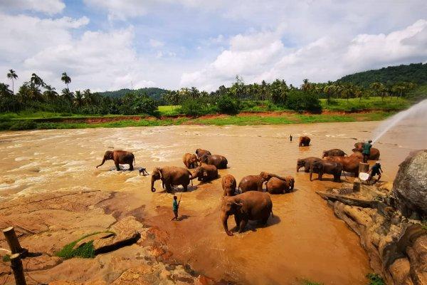 Srí Lanka: To najkrajšie z ostrova vrátane safari (odlet z Košíc)