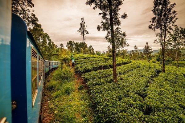 Srí Lanka: To najkrajšie z ostrova vrátane safari a jazdy vlakom