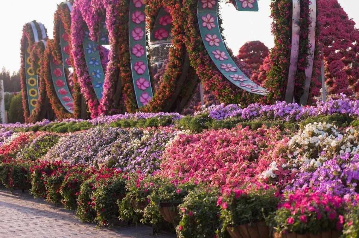 miracle garden dubaj spojené arabské emiráty
